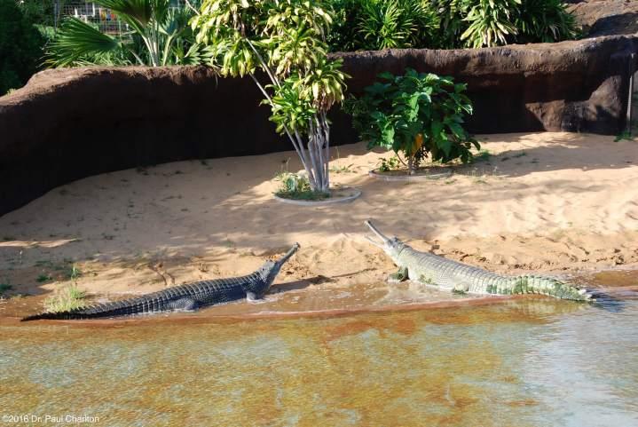 Hawaii Zoo 2
